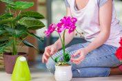Выращивание орхидеи ванда: секреты профессионалов